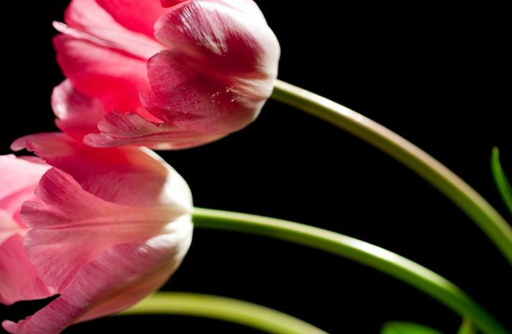 001_flower_still_foto_morosetti