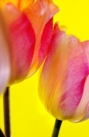 003_flower_still_foto_morosetti
