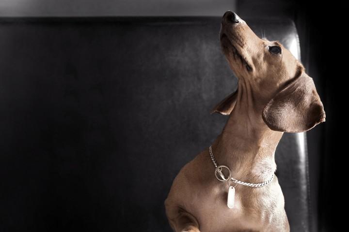 005_portrait_privati_animal1_dog_foto_morosetti