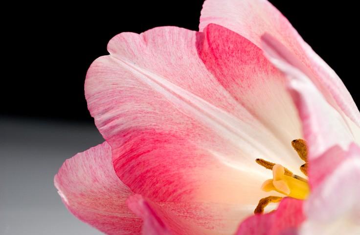 008_flower_still_foto_morosetti