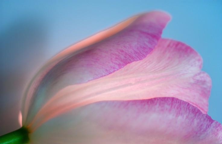 010_flower_still_foto_morosetti