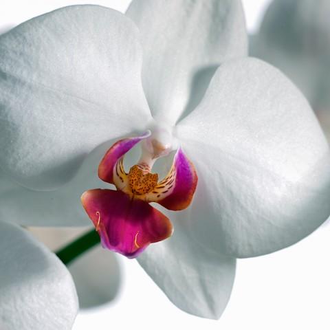 011_flower_still_foto_morosetti
