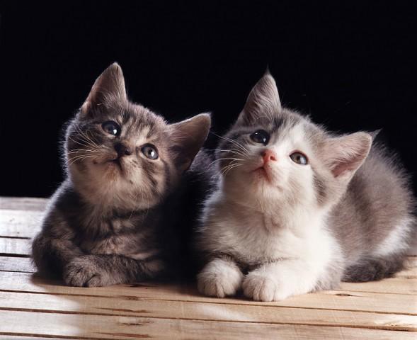 011_portrait_privati_animal_cat_foto_morosetti