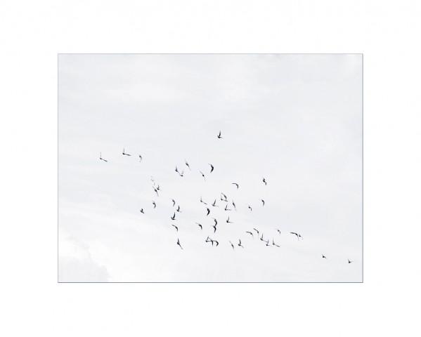 008_privati_volo_birds_foto_morosetti