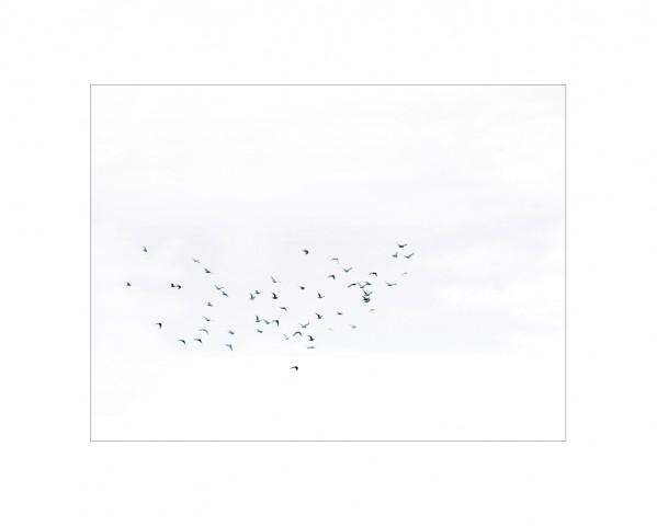 002_privati_volo_birds_foto_morosetti