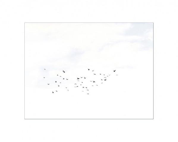 003_privati_volo_birds_foto_morosetti