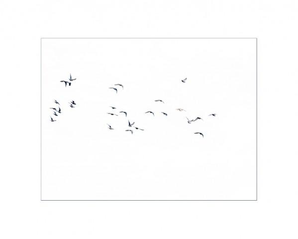 004_privati_volo_birds_foto_morosetti
