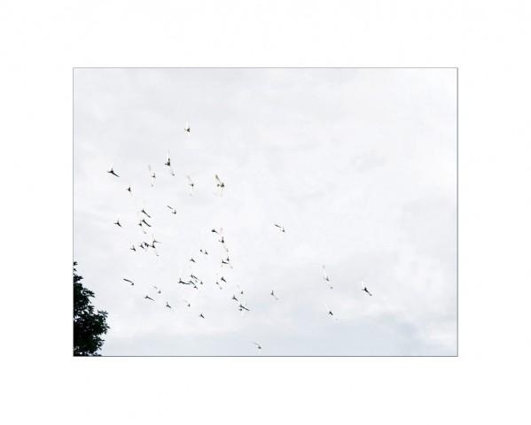 005_privati_volo_birds_foto_morosetti