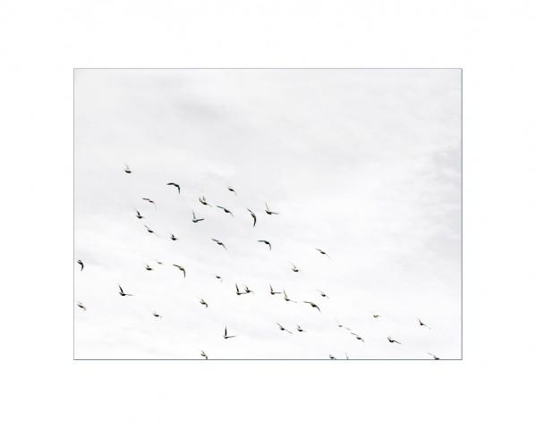 006_privati_volo_birds_foto_morosetti