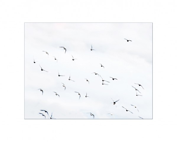 007_privati_volo_birds_foto_morosetti