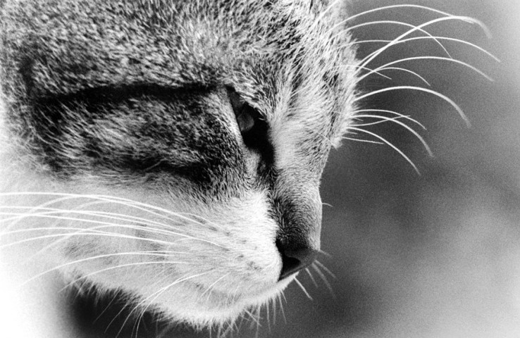 008_portrait_privati_animal_cat_foto_morosetti
